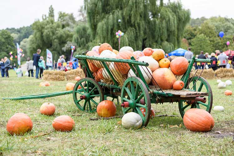 Fall Events in the Capital Region